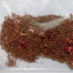 semena-klubniki5