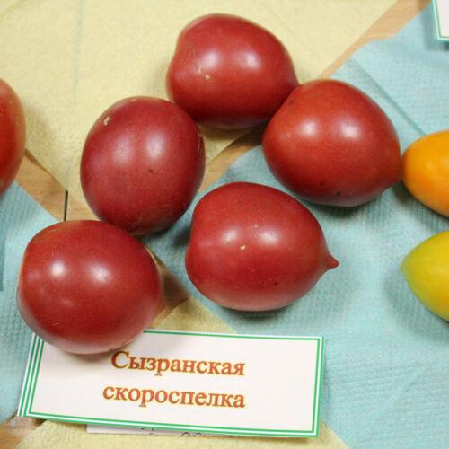 tomat_syzranskaja_skorospelka_2