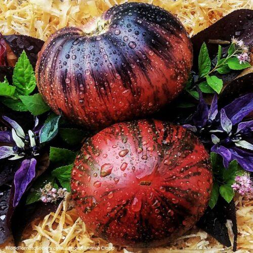 Фантастические томаты