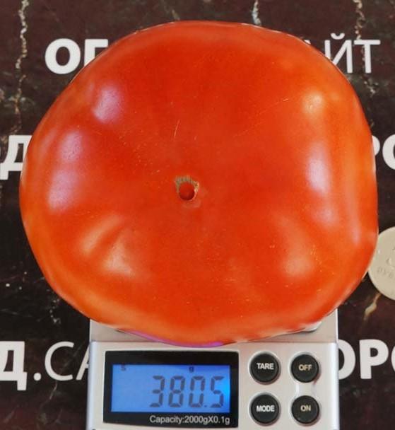 pomidor-lord-minusinskiy-2