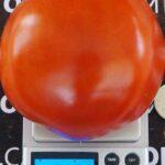 pomidor-vareniki-4