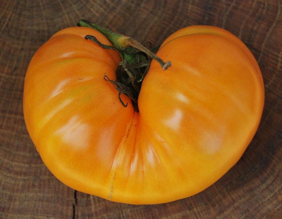 tomato-amanaorange-01