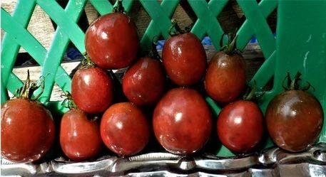 Необычные томаты-черри