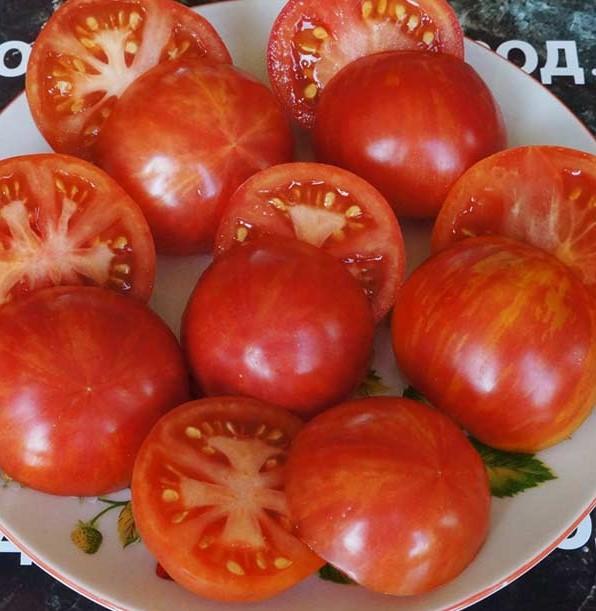 pomidor-bred-geyts-dina-4