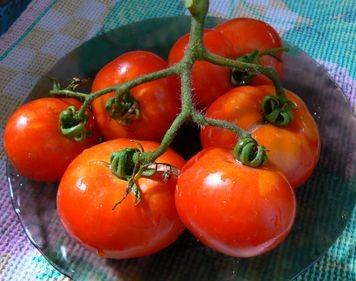 tomat-Victorian-Dwarf-N1