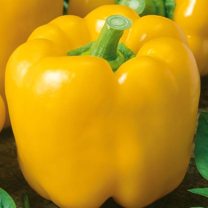 papryka-yellow