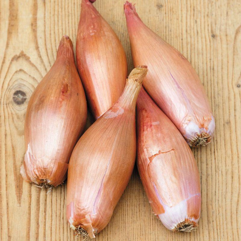 Zebrune (Зебрюйн) – «Куриные бедрышки Пуату»